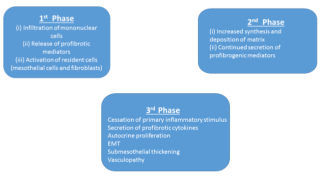 mechanism of mesothelial mesenchymal transition mmt Lineage tracing reveals distinctive fates for mesothelial cells and submesothelial fibroblasts during peritoneal injury.