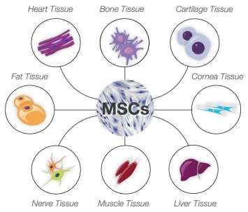 Image result for hmsc to cartilage bone muscle fat