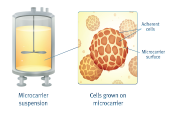 Image result for microcarriers cell culture