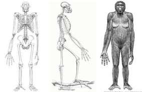 ../bone1.jpg