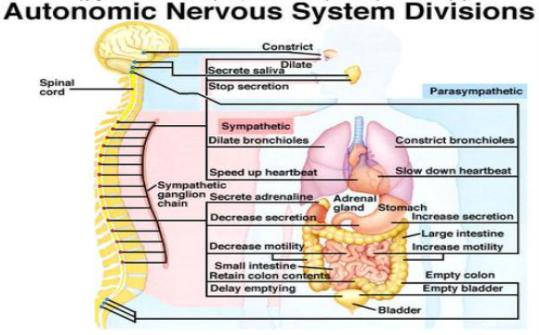 http www biologymad com nervoussystem nervoussystemintro htm