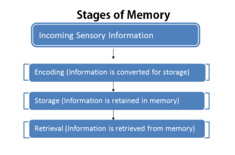 Image result for stages of memory