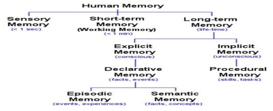 Diagram 2 Source Human Memory Types 24 02 2017 1730