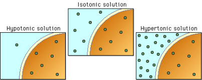 http://www.phschool.com/science/biology_place/biocoach/biomembrane1/images/Tonic2.gif