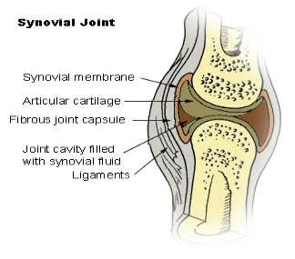 Image result for synovial joints