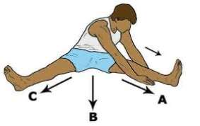 Image result for seated v stretch