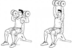 Image result for shoulder press diagram