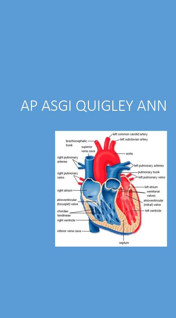 Anatomy and Physiology of the Human Heart