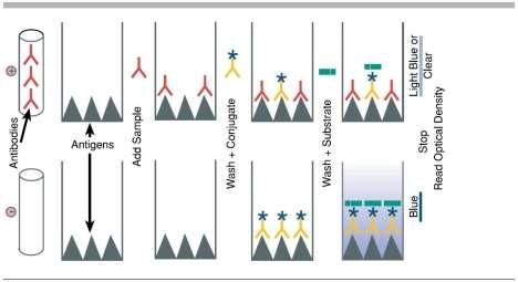 Diagram of Competitive ELISA Steps